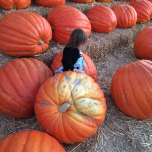 ladybug at the pumpkin patch